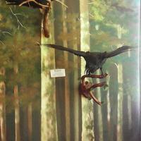 В зале птиц смешанных и хвойных лесов музея «Мир птиц национального парка Мещёра. Рябчик и ворон