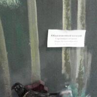 В зале птиц смешанных и хвойных лесов музея «Мир птиц национального парка Мещёра. Обыкновенный козодой