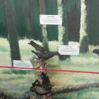 В зале птиц смешанных и хвойных лесов музея «Мир птиц национального парка Мещёра. Чиж, деряба и зяблик