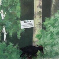В зале птиц смешанных и хвойных лесов музея «Мир птиц национального парка Мещёра. Чечётка и певчий дрозд. Желна