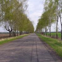 Дорога на Попівку