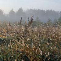Красиловка, лес, осень