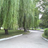 Дослидницкое, осень 2015 года