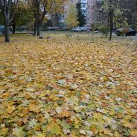 30 октября 2015 года, Дослидницкое
