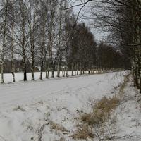 Дорога в Детскосельском