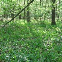 Лес в Миролюбовке весной