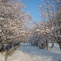 Улица Пушкина зимой