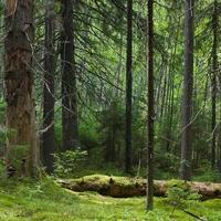 Леса в окресностях Ананьино.