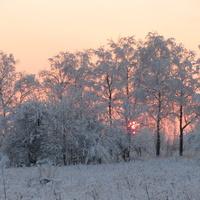 Кингисеппское шоссе, Яблоневый сад, розовый закат