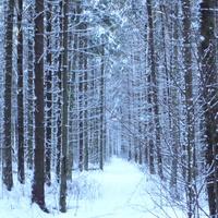 Лес у Липок