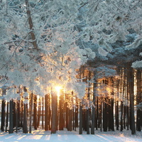 парк Собянина зимой