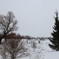 д. Филипповичи, Зарайский район, 2016. Калина и ель