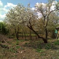 Весна в х.Курины(Нижнекардаильский)