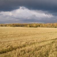 Осеннее поле в Апальщино