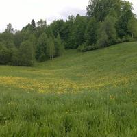 Щипцово- начало лета