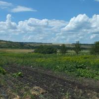 Вид с огорода в июне
