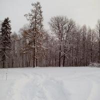 Исполины Щипцовского парка