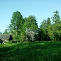 Вид Щипцовского парка.