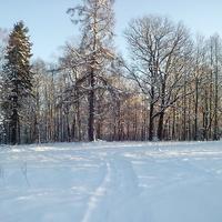 Отблески зимней зари.