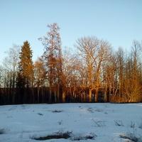 Солнце прощается с парком