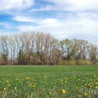 Весенняя степь у турбазы Белый Берег. Цаган-Аман