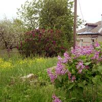Кучугурская Сакура