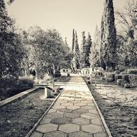 Крым. Парк Ливадийского дворца