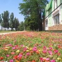 Городские цветы. Ул.Таврическая