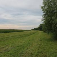 Сотниковское, поле