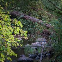 Волшебная речка в лесу