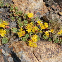 растения местной природы