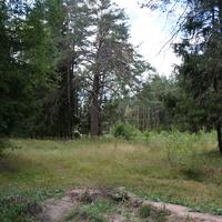 Лес у деревни Самойлиха