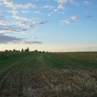 Нестерово, поле