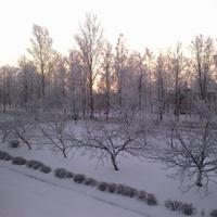 Школьный сад зимой
