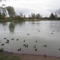 улица Политрука Пасечника, Гореловское озеро