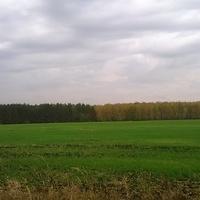 Граница двух лесов-соснового и берёзового