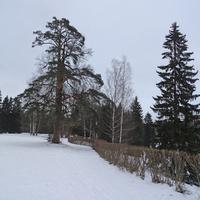 Павловский парк. Декабрь-2016