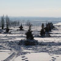 Терновка.Высадка елей на бульваре Героев Космоса.Декабрь 2016 года.(зум)