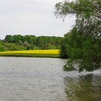 Михайлівський ставок.