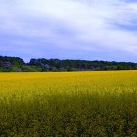 Михайлівське поле.