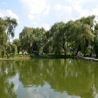 Городской сад.