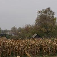 Михайловка, огороды
