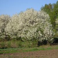Весна на дачному масиві.