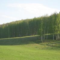 Заливной луг и Криворукий лес рядом с пос. Битюг Воловского района Тульской области