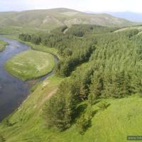 Ashotsk  Forest