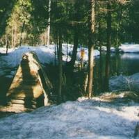 Лесной родник около деревни Деревнищи
