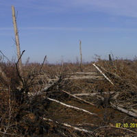 Выгоревшие заросшие торфяные карты юго-юго-восточнее с. Радовицы