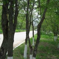 Мокроус. Улица Победы - историческая часть.