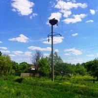 Гнездо аистов на высокой электроопоре.