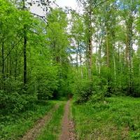 Нижнекамский лес